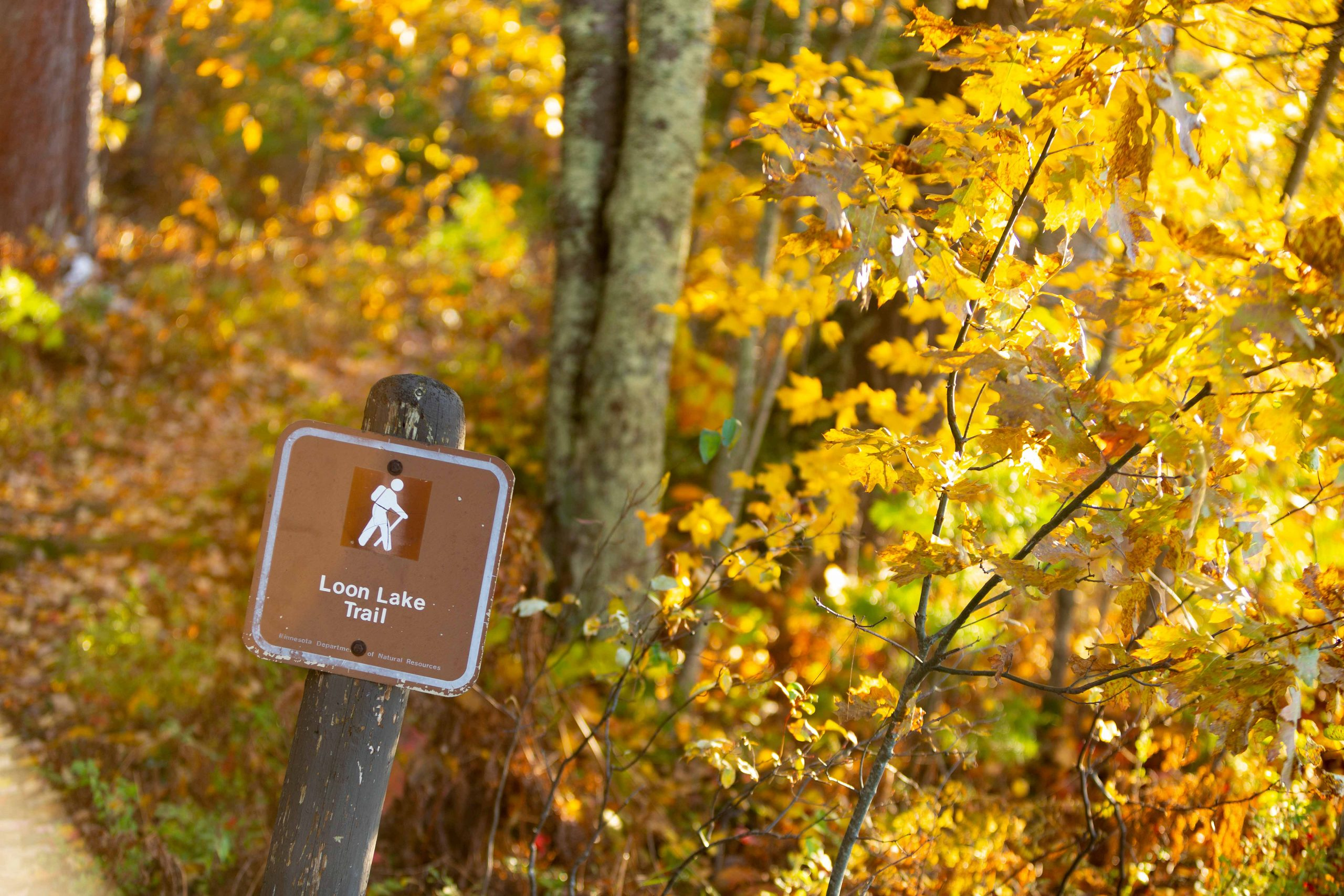 McGregor_Fall_Hiking_Trail_Savanna_5742_Web